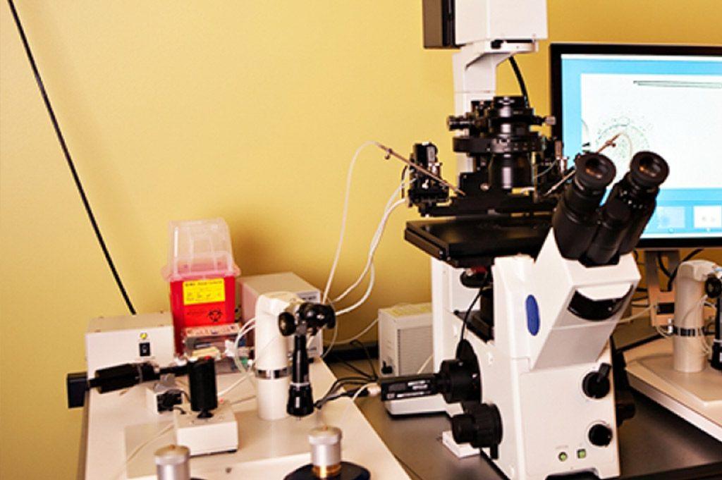Yüksek optik büyütme ile daha iyi sperm seçimi: IMSI